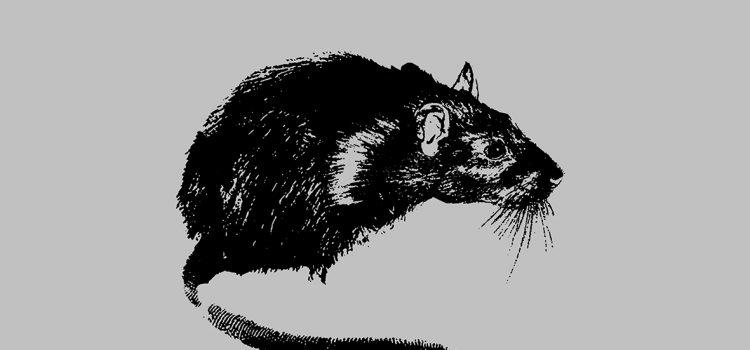 The Briefs – Platinum Rats (Damaged Goods Record/Burger Records)