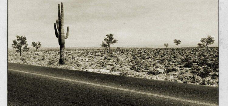 The Hangmen – Cactusville (Acetate Records)